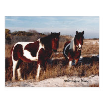 Assateague Wild Horses 2 - Postcard