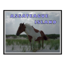 Assateague Wild Horses 2 Postcard