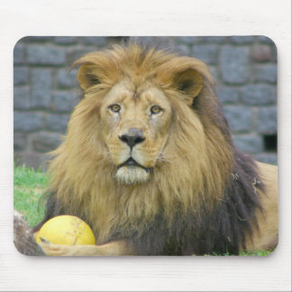 Assorted Animal Mousepads