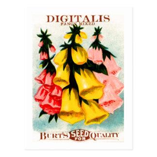 Assorted Digitalis Foxglove Seed Packet Postcards