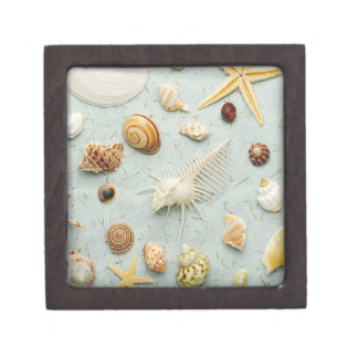 Assorted seashells on blue background keepsake box