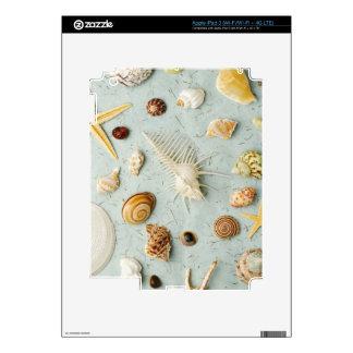 Assorted seashells on blue background skins for iPad 3
