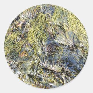 Assorted Seaweeds Round Sticker