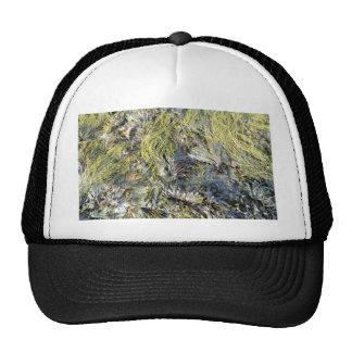 Assorted Seaweeds Trucker Hat