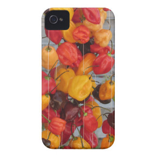 Assortment of colorful chilli peppers iPhone 4 case