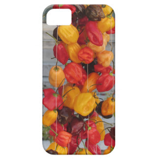 Assortment of colorful chilli peppers iPhone SE/5/5s case