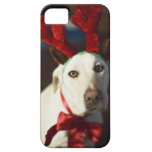 Astas del reno del perro que llevan iPhone 5 carcasa