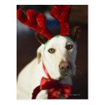 Astas del reno del perro que llevan postal
