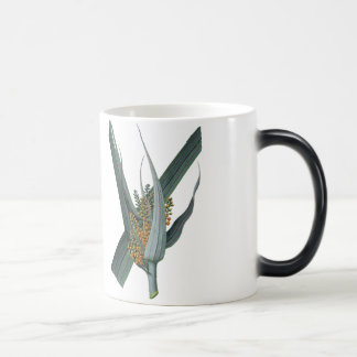 Astelia Nervosa Magic Mug
