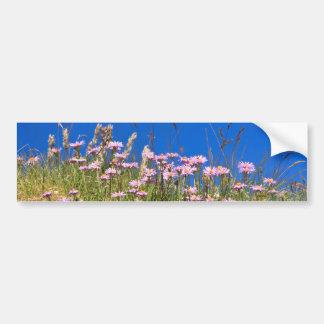 Aster Alpinus Bumper Sticker