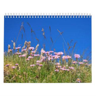 Aster Alpinus Calendar