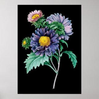 Aster botanical black background print