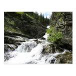 Aster Creek at Glacier National Park Postcard