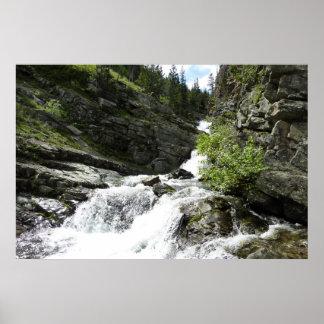 Aster Creek at Glacier National Park Poster