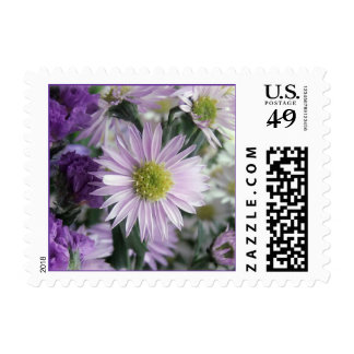 Aster Dream Postage Stamp