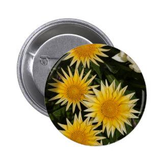 aster flower in the garden 2 inch round button