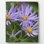 Aster Flower Placa