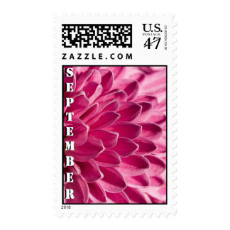 aster flower stamp
