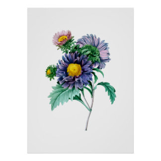 ASTER flowers bouquet botanical print Redoute