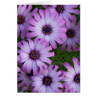 Aster Flowers Greeting Card