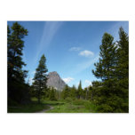 Aster Park Trail at Glacier National Park Postcard