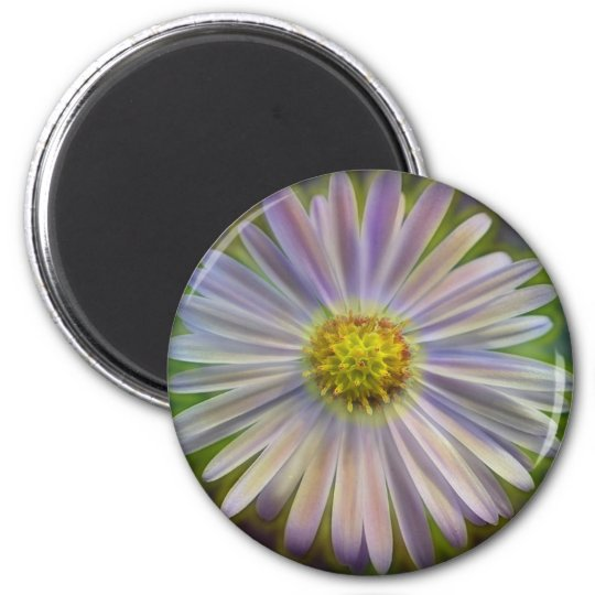 Aster Tataricus Flower With Energy Aura Magnet