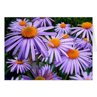 Aster Tongolensis Wartburg Star Purple Flower Card