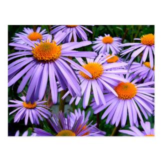 Aster Tongolensis Wartburg Star Purple Flower Postcard