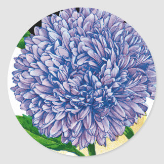 Aster Vintage Seed Packet Classic Round Sticker