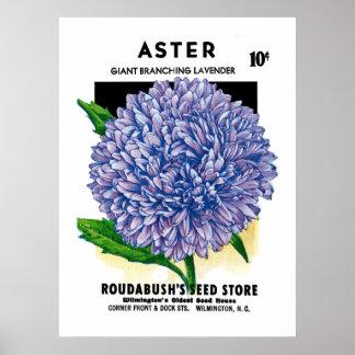Aster Vintage Seed Packet Poster