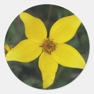 Asteracea Round Stickers