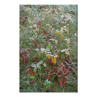 Asteres, agrimony y escarcha posters