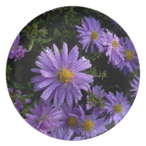 asteres púrpuras por la mañana plato de comida