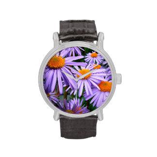Asteres púrpuras relojes