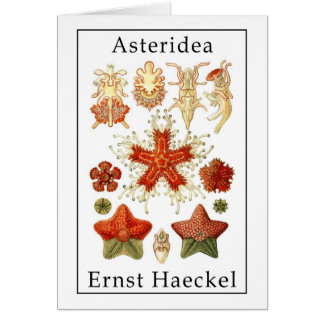 Asteridea by Ernst Haeckel Card