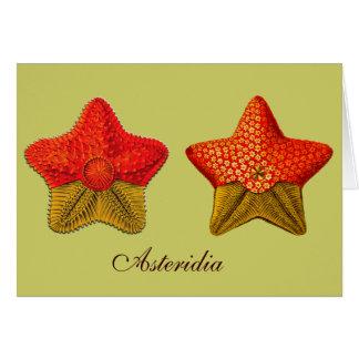 Asteridia (starfish) Greeting Card