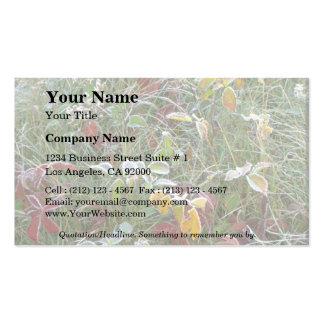 Asters, agrimony and hoar-frost Double-Sided standard business cards (Pack of 100)