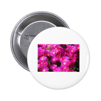 asters 2 inch round button