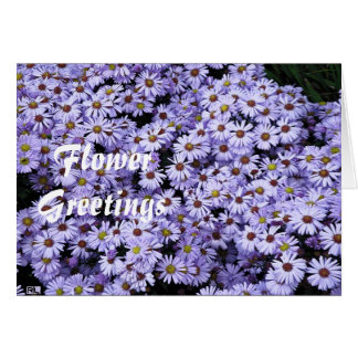 Asters Card