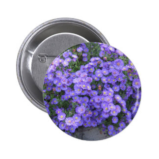 Asters in the Fall Perenial Garden - photo Pinback Buttons