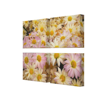 Asters on Wrapped canvas Gallery Wrap Canvas