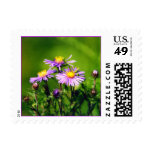Asters Postage