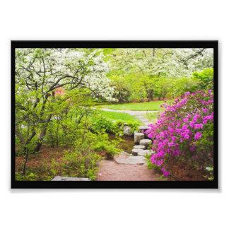 Asticou Azelea Garden In Spring, Northeast Harbor Photo Print