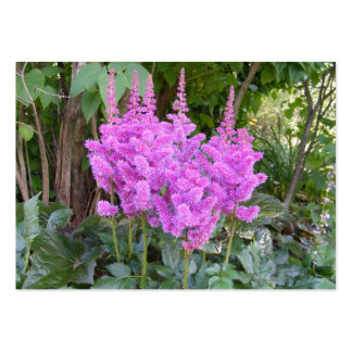 Astilbe ~ATC Large Business Cards (Pack Of 100)