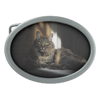 Astillas del gato de Kimber de la hebilla del cint Hebillas Cinturon Ovales