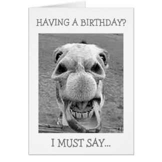 ASTONISHED MULE-HAVING A BIRTHDAY? CARD