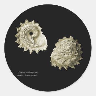Astraea heliotropium classic round sticker