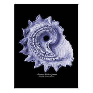 Astraea heliotropium postcard