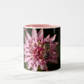 Astrantia con la abeja tazas de café