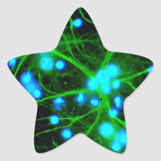 Astrocyte Are Star Shaped Glial Cells in the Brain Star Sticker